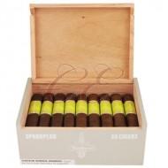 CAO Flathead Sparkplug Box 25